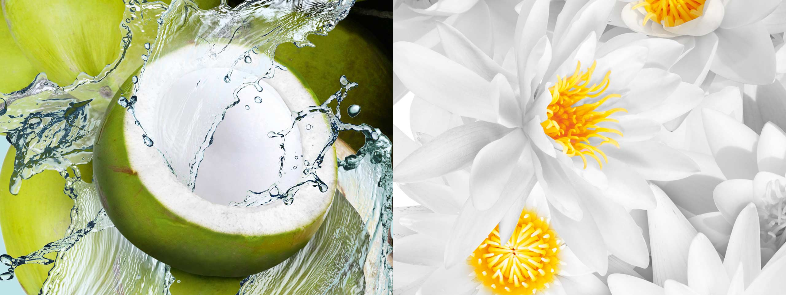 schauma_ru_nature_moments_coconutwater_2560x963